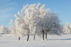 Hoarfrost zakrywający drzewa Fotografia Royalty Free