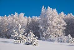 hoarfrost zakrywający drzewa Zdjęcia Royalty Free