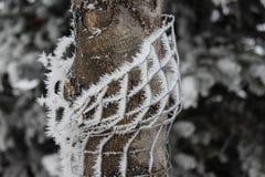 Hoarfrost zaskorupiający się drut na drzewie obraz royalty free