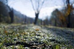 Hoarvorst op het gras Royalty-vrije Stock Fotografie