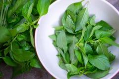Hoary basil or lemon basil put on bowl Stock Photography
