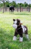 Hobbelpaard en echt paard Stock Afbeeldingen