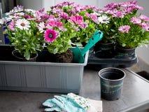 Hobby die op het balkon tuinieren Royalty-vrije Stock Afbeeldingen