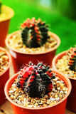 Hobby gardening with many of sprout cactus in Nursery garden for sale make money. NHobby gardening with many of sprout cactus in Nursery garden for sale make Stock Photos