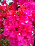 Hobby. Pink flowers. Something different and beautiful Royalty Free Stock Photography