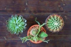 Hobbyconcept Verschillende types van cactussen in bloempotten Vlak leg, donkere rustieke achtergrond, beschikbare ruimte voor tek stock foto