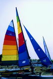 Hobie Cat Sails Stock Image