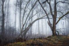 Hoboken, Belgi? - een bos in de mist royalty-vrije stock afbeelding