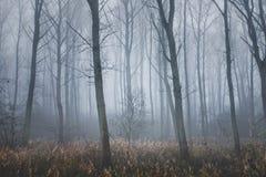 Hoboken, Belgi? - een bos in de mist royalty-vrije stock afbeeldingen