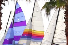 Hoby cat colorful sails palm tree leaf Royalty Free Stock Photo
