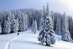 Hoch auf den Bergen der Mann geht auf die schneebedeckten Felder und die Wälder am kalten schneebedeckten Tag Lizenzfreies Stockfoto