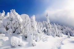 Hoch auf den Bergen im Wald, der mit Schnee dort bedeckt wird, ist die einsame alte hölzerne Hütte, die mit Zaun auf dem Rasen st Lizenzfreie Stockbilder