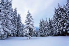 Hoch auf den Bergen im Wald, der mit Schnee dort bedeckt wird, ist die einsame alte hölzerne Hütte, die mit Zaun auf dem Rasen st Lizenzfreie Stockfotos