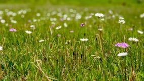 Hoch machen Wiese mit Frühlingsblumen im neuen, zarten Grün fest lizenzfreie stockfotografie