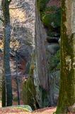 Hoch Steine im Wald Lizenzfreie Stockfotos