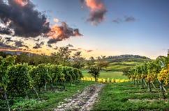 Hoch Wolken über den Weinbergen Lizenzfreie Stockfotografie