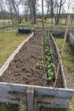 Hochbeete, die Bohnen in einer ländlichen Einstellung anbauen Stockbild
