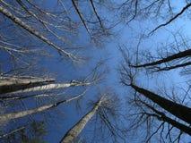 Hochfliegende Bäume Stockbild