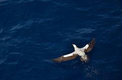 Hochfliegender Vogel Lizenzfreie Stockfotografie
