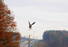 Hochgeschwindigkeitswindkraftanlagen und Vögel Lizenzfreie Stockbilder