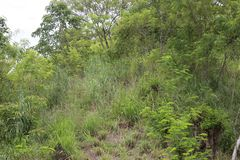 Hochlandwild wachsende pflanzen Lizenzfreie Stockfotos