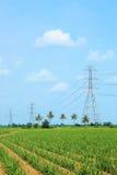 Hochspannungsleitungen auf dem Maisgebiet Lizenzfreies Stockfoto