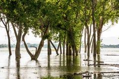 Hochwasser überholen einen Wald von Bäumen stockbild