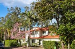 Hochwertiges weißes australisches Haus mit Ziegeldach- und Palmen und rosa blühender Baum in der Front - hohe Eukalypten hinten Stockfotografie