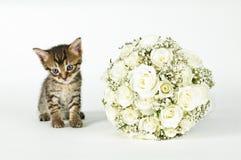 Hochzeits-Blumenstrauß und eine nette Katze. Stockfotografie