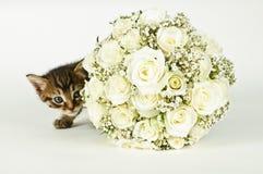 Hochzeits-Blumenstrauß und eine nette Katze. Stockfoto