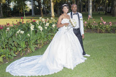 Hochzeits-Braut-Bräutigam Lizenzfreie Stockfotos