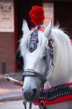 Hochzeits-Pferd Stockfoto