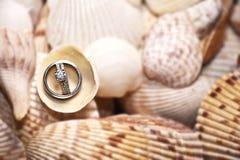Hochzeits-Ringe auf Shells lizenzfreie stockfotos