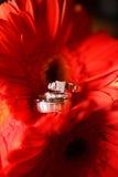 Hochzeits-Ringe und Blumen Lizenzfreies Stockfoto