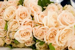 Hochzeits-Rosen Lizenzfreies Stockbild