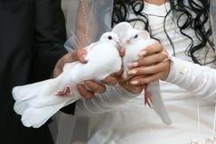 Hochzeits-Tauben Stockbild