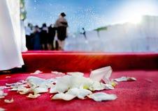 Hochzeitsblumenblätter von Rosen auf rotem Teppich Lizenzfreie Stockfotos