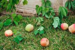 Hochzeitsdekorationen, Blumen in einem Korb und Äpfel auf dem Gras stockfoto