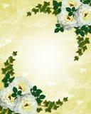 Hochzeitseinladungs-Weißrosen Lizenzfreies Stockfoto