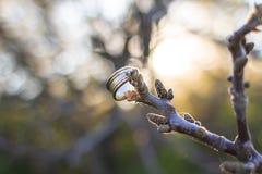 Hochzeitsgoldring auf einem Baumast Lizenzfreie Stockfotos