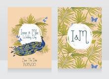 Hochzeitskarten mit schönem Pfau lizenzfreie abbildung