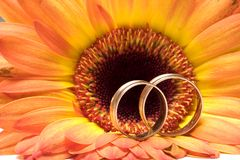 Hochzeitskonzept Lizenzfreies Stockbild