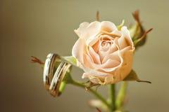 Hochzeitskonzept - Eheringe und stieg Hochzeitskarte mit Platz für Ihren Text Heiratssymbole, Attribute Feiertag, Feier Stockfotografie