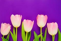 Hochzeitsmodell mit rosa Papierliste und Tulpe blüht auf blauer Tischplatteansicht Schönes Blumen flache Lageart lizenzfreie stockfotos