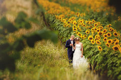 Hochzeitspaare in den Sonnenblumen auf Feld stockfotos