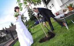 Hochzeitspaare, die Baum pflanzen Lizenzfreie Stockfotos