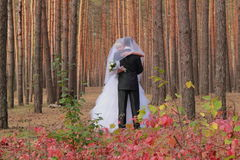 Hochzeitspaare in einem Wald Lizenzfreies Stockfoto
