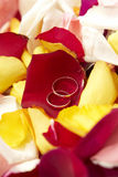 Hochzeitsringe auf Blumenblättern der Rosen. lizenzfreies stockfoto