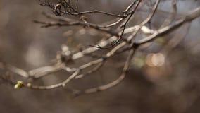 Hochzeitsringe auf einem Zweig stock video