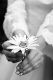 Hochzeitsringe auf einer weißen Blume Stockfotos